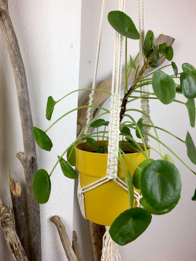Suspension pour plante